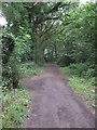 SJ5576 : Footpath through Warburton's Wood by David Quinn