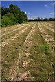 TL5764 : Field near Swaffham Prior by Bob Jones