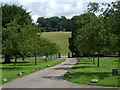 SK2569 : Avenue of trees at Edensor, Derbyshire by nick macneill