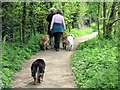 SP9113 : Dog Walking at Tringford Reservoir by Chris Reynolds