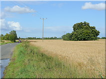 TL0962 : Road to Little Staughton by Jonathan Billinger