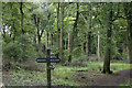 SP8505 : Goodmerhill Wood south-east of Chequers by David Kemp
