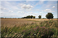 TL6073 : Thrift Drove, Soham Fen by Bob Jones