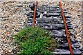 SY6577 : Old Narrow gauge Track, Chesil Beach : Week 34