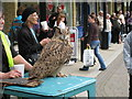 TQ8109 : Owl at Queen's Square by Oast House Archive