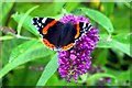 NS8544 : Red admiral (Vanessa atalanta) by Tiger