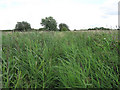 TL5159 : Footpath through Little Wilbraham Fen by Hugh Venables
