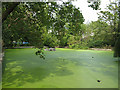 TQ3776 : Brookmill Park: lake with algal bloom by Stephen Craven
