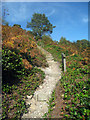 TQ1343 : Steps to Leith Hill by Oast House Archive