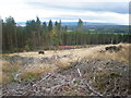 NH7276 : Hut in Forestry clear fell above Scotsburn by Sarah McGuire