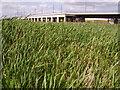 TQ5479 : Channel Tunnel Rail Link at Purfleet by Kenneth Yarham
