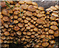 J2764 : Fungus, Lisburn (5) : Week 40