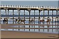 NZ6621 : Horse riding at Saltburn Pier by Paul Buckingham