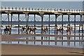 NZ6621 : Horse riding at Saltburn Pier by Paul Buckingham