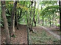 SP8910 : Two Trails through the woods at Buckland Hoo by Chris Reynolds