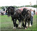 SP6606 : Great Bucks Steam Rally, Shabbington, 2009 by Gerald Massey
