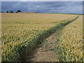 TL0936 : Footpath through crops by Shaun Ferguson