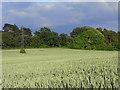 SU7079 : Farmland, Kidmore End by Andrew Smith