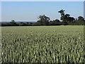 SU8774 : Farmland, Hawthorn Hill by Andrew Smith