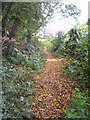 SX5152 : Footpath on the edge of Jew's Wood Plymstock by Rod Allday