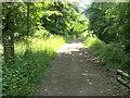 SP8907 : Hale Wood by Shaun Ferguson