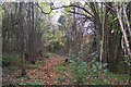 TQ4761 : Woodland Path through Fox Wood by David Anstiss
