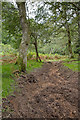 SU2705 : Warwickslade Cutting: stream bed dug out by Peter Facey
