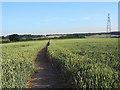 SU9795 : Footpath through wheat near Amersham by Andrew Smith