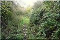 SU4181 : Bridleway from Farnborough by Graham Horn