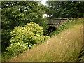 SE0735 : Former bridge on the Queensbury to Keighley Railway by Alexander P Kapp