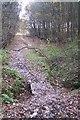 TQ7536 : Footbridge on the High Weald Landscape Trail by David Anstiss