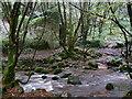 SW7329 : Bosahan Woods by Hansjoerg Lipp
