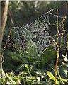 SX5555 : Spider's web, Greenacres by Derek Harper