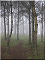 SO6921 : Track through trees in fog : Week 50