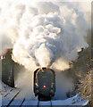 TG1503 : LNER A4 Class 4-6-2 No 60019 Bittern by Evelyn Simak