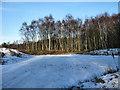 SJ7965 : Birch trees by Seo Mise