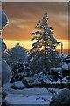SD5300 : Winter sunrise in Billinge : Week 1
