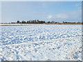 TF4107 : Snowy fields by Richard Humphrey