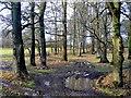 SX0959 : Oak and beech woodland by Jonathan Billinger