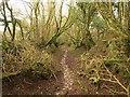SX0660 : Footpath to Breney Common by Derek Harper