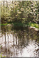 SU7593 : Ripples on a Woodland Pond by john shortland