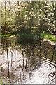 SU7593 : Ripples on a Woodland Pond by john shortland