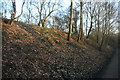 TQ4036 : Railway cutting by the Forest Way & Sussex Border Path by N Chadwick