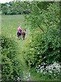 SJ6151 : Farm track near Stoneley Green, Cheshire by Roger  Kidd