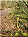 SX4961 : Path near Roborough by Derek Harper