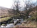 SX6189 : River Taw by Dylan Inglis