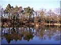 SU8842 : Stockbridge Pond : Week 10
