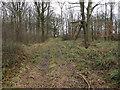 TL6656 : High seat for shooting deer by Hugh Venables