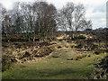 SP0897 : A path across the heath in Sutton Park by Row17