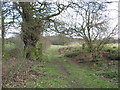 SJ6171 : Hunt's Lane with ancient oaks by Dr Duncan Pepper